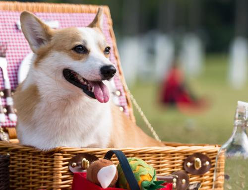 Dog-Friendly Fourth of July